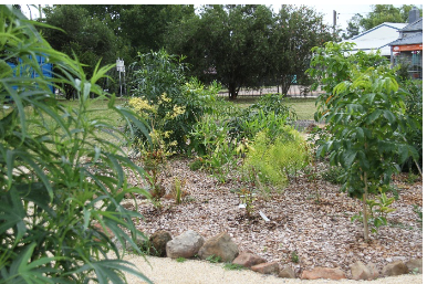 Slow Food Native Plant Garden Tour at the Guide Hall